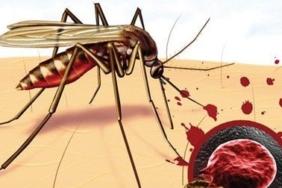 sıtma nasıl bulaşır