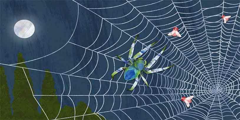Örümcek Ağının Gizemi Nedir