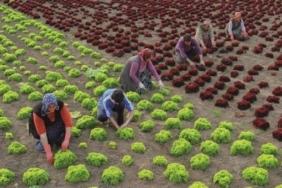 anlamlı ve güzel en yeni çiftçiler günü kutlama mesajları ve sözleri