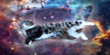 kedi-ile-ilgili-ruya-tabirleri