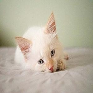 rüyada beyaz renkli kedi görmek anlamı nedir