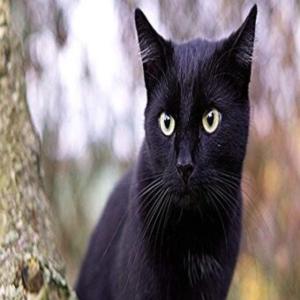 rüyada siyah kedi görmek